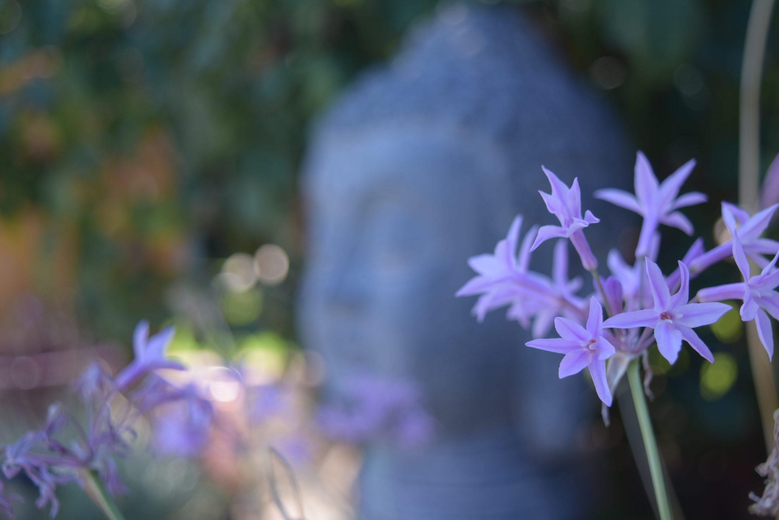 Budismo en Pocas Palabras